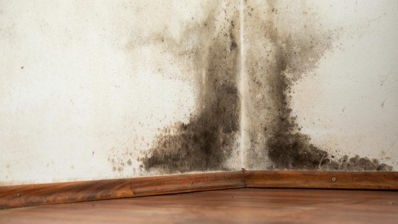 Black Mold Exposure Treatment